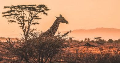 africa safary